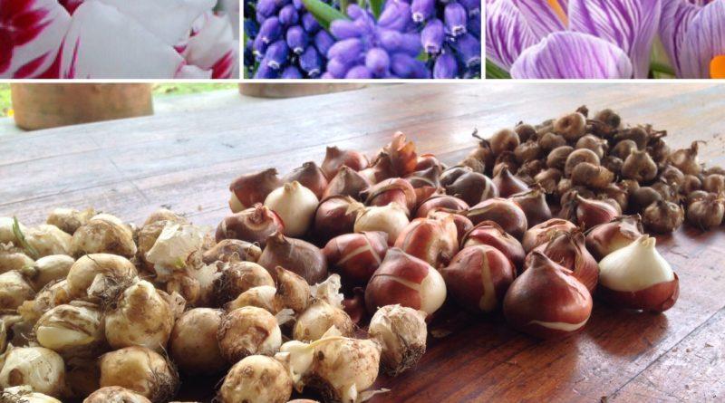 185 Bulbi… per un Vaso